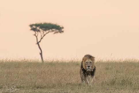 Afrika 7.jpg