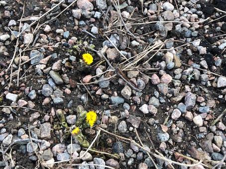 Våren har kommit till Önums friskola