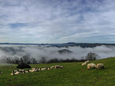Livraison de viande d'agneau à Clermont-Ferrand