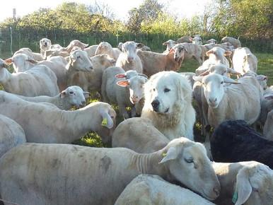 22 et 23 octobre 2020 : Formation chien de protection en Haute Loire