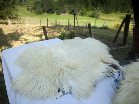 Peaux lainées