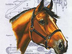 4. Horse-head-web.jpg