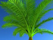 palmera 2.jpg