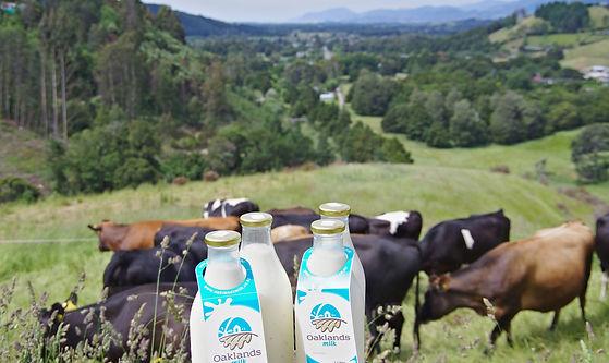Oaklands Milk, cows, milk delivery, glass bottle