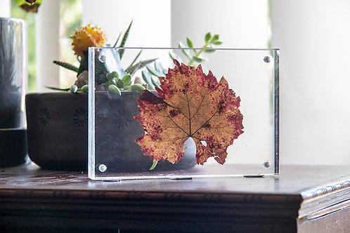 Framed Grape Leaf