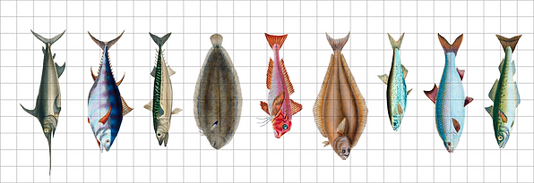 Poissons6.png