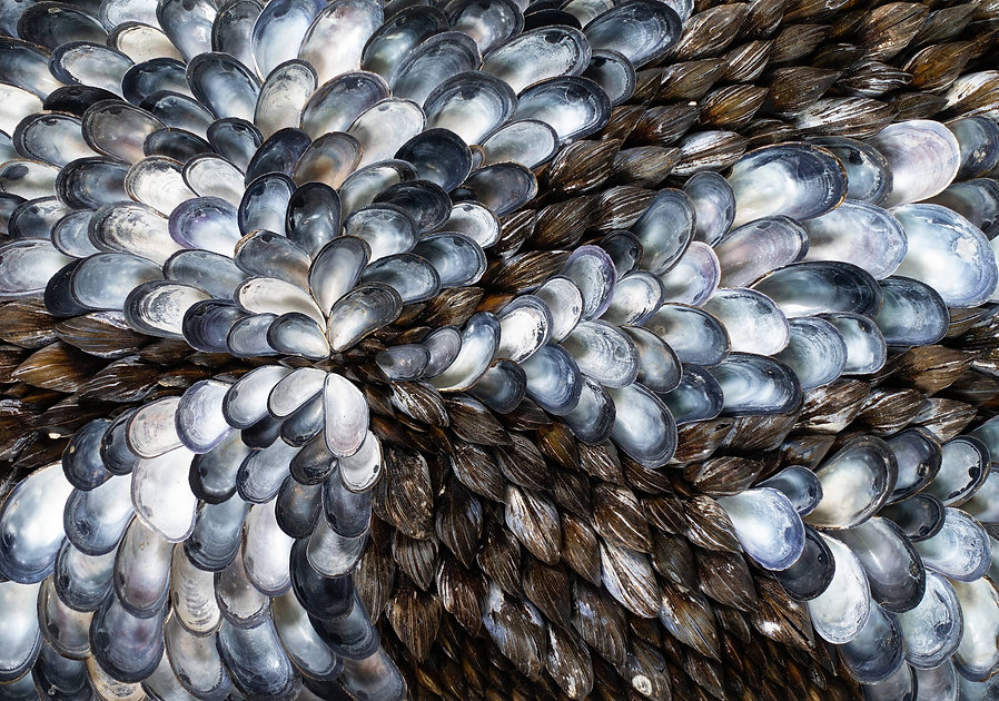Cover Blue mussels.jpg