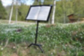 Music-stand-among-wood-anemones.jpg