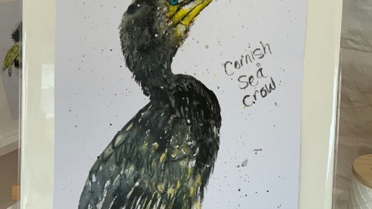 Cornish Sea Crow