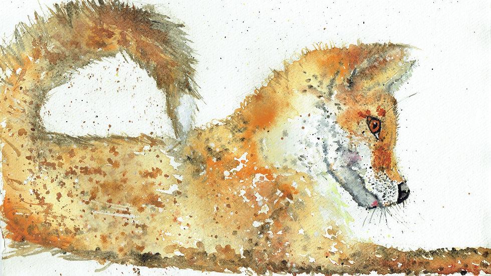 Cornish Fox