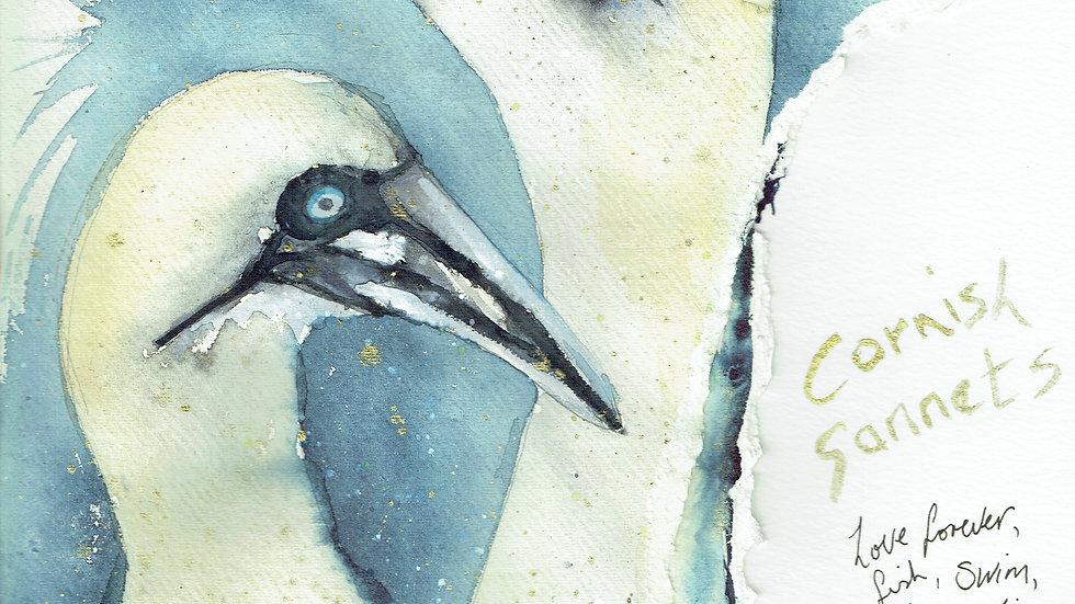 Cornish Gannets