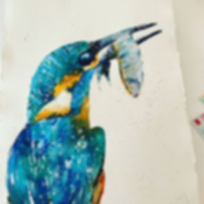 Cornish kingfisher#cornwallhomeandlifest