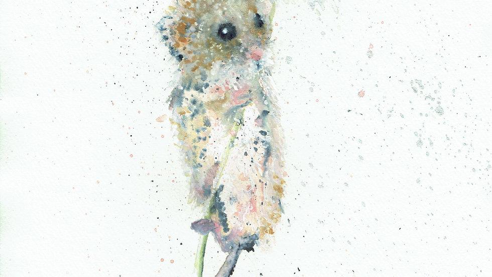 Cornish Harvest Mouse