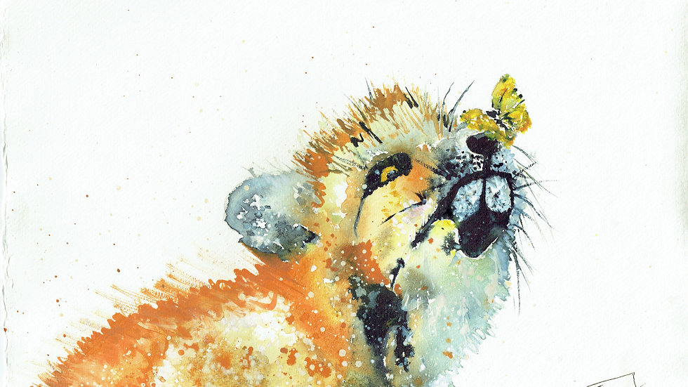 Cornish Fox Cub