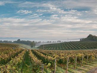 Barboursville Vineyards