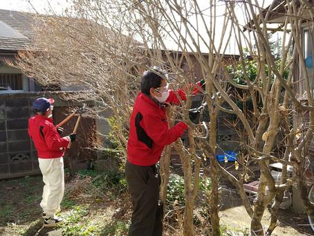 お庭の木の剪定を助っ人しました!