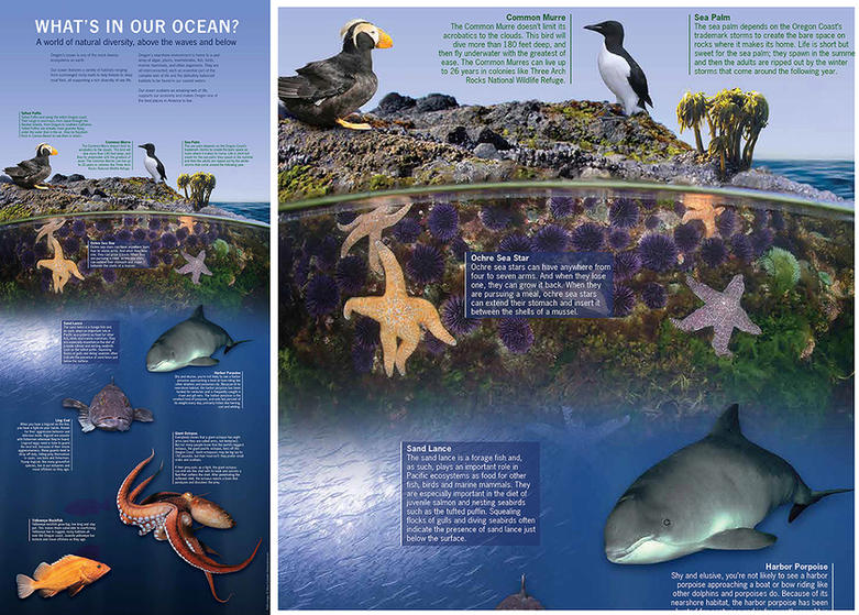 Our Ocean Poster