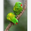 Thumbnail: Scaly-Breasted Lorikeet