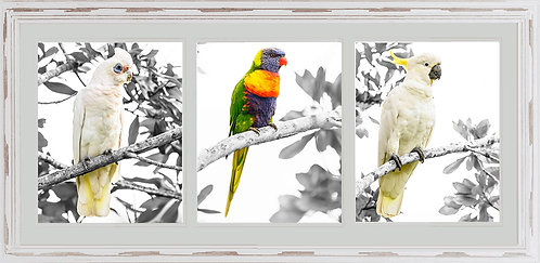 Australian Bird Collage 1
