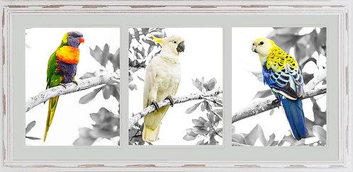 Australian Bird Collage 2