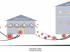 SARS-CoV-2 escaped natural immunity, raising questions about vaccines and therapies