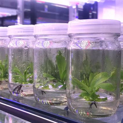 ธนาคารพันธุกรรมพืชในสภาพปลอดเชื้อ