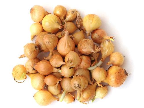 Onion Sets for Planting (1 lb.)