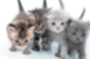Chipped cats @ MobileMicrochipping