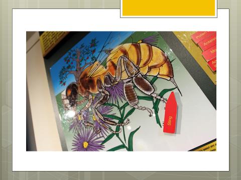 Pollinatarium_picture