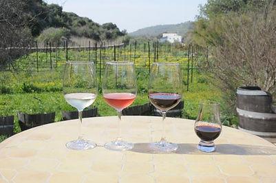 amphorae-winery.jpg