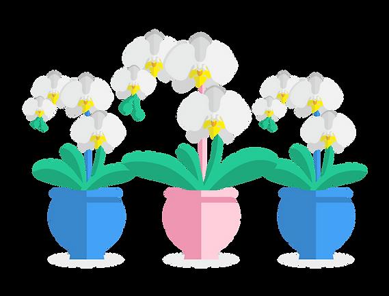 TianFa Phalaenopsis Theme