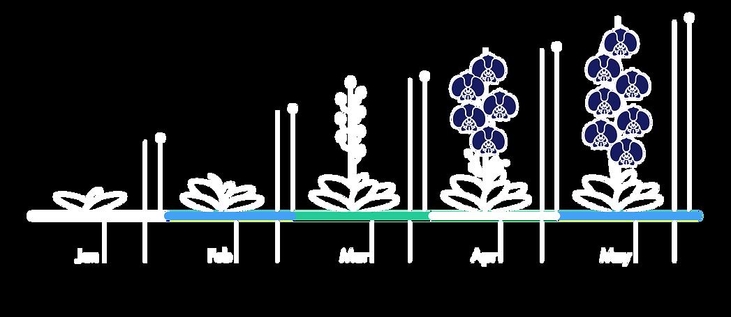TianFa Bloom Theme