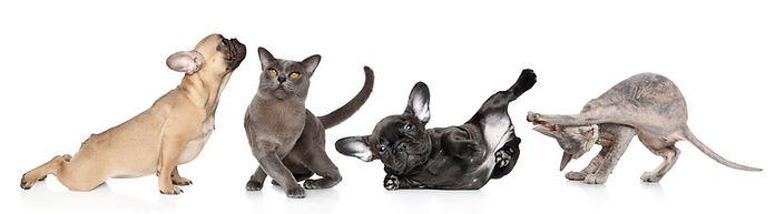 Puppy and kitten yoga banner.jpg