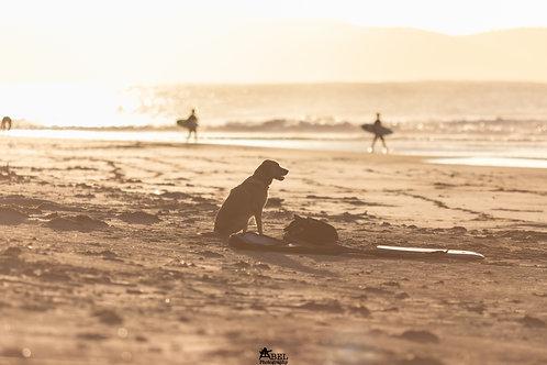 Dog Watching His Master