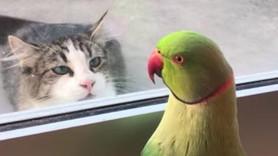 Emoções com penas: Aves ciumentas