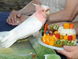 """Quanto tempo vive um """"papagaio""""?"""