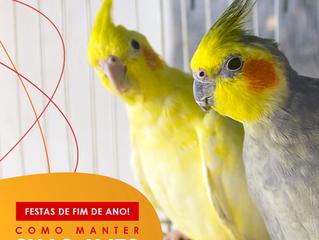 Como manter suas aves seguras e saudáveis com as festas de fim de ano