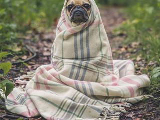 Saiba como cuidar do seu pet no inverno