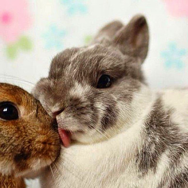 Comportamento: como reconhecer e entender os coelhos