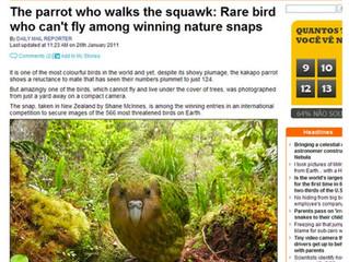 KAKAPO, um papagaio raro, é fotografado na Nova Zelândia