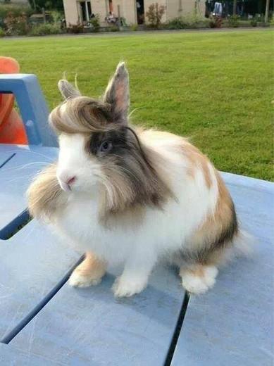 Meucoelho tem muito pelo, devo tosarele no verão?