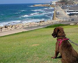 סוואל מתכלת על הים