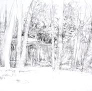 Grove sketch