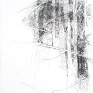 Pine/Parsonsfield