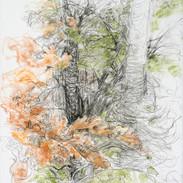 Autumnal/Parsonsfield