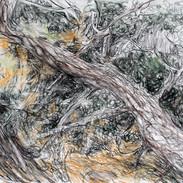 White pine/Baldwin