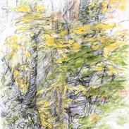 Autumnal/VT #2