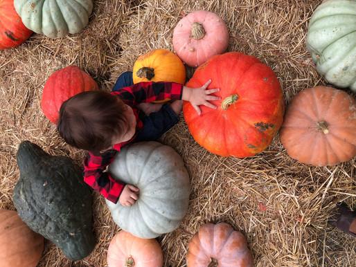 Loudoun County Fall Farm Tour October 20th-21st 2018