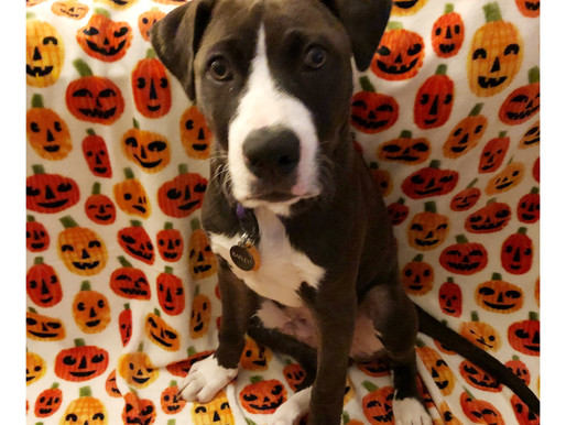 Halloween Safety Tips - For Your Pets!