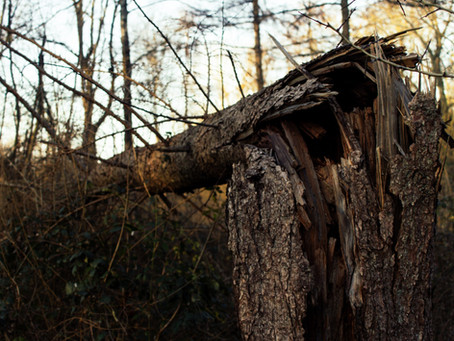 A Tree Felled in the Woods